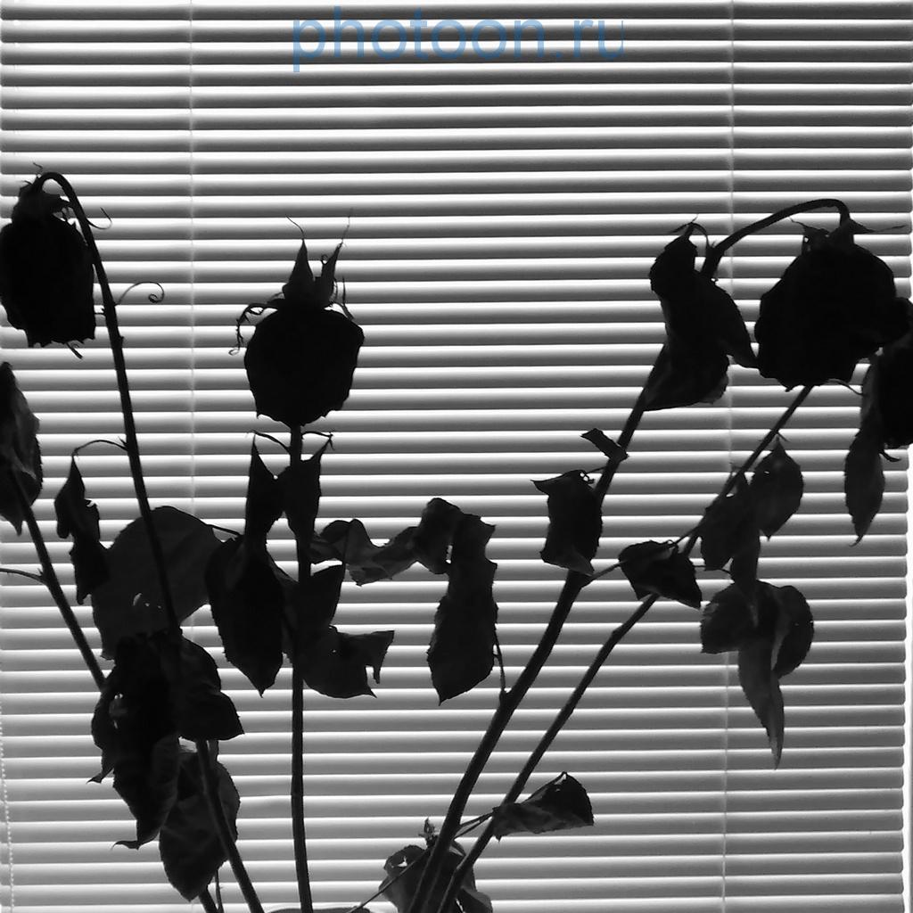 roses33w