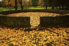 Она для меня Собрала листьев желтых Полное блюдо